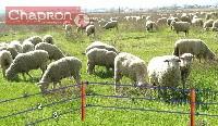 Schemat ogrodzenia elektrycznego dla owiec