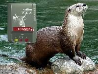 Elektryczny pastuch to często jedyne skuteczne rozwiązanie problemu z wydrą